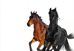 Lil Nas X – Old Town Road (Instrumental) (Prod. By Young Kio)